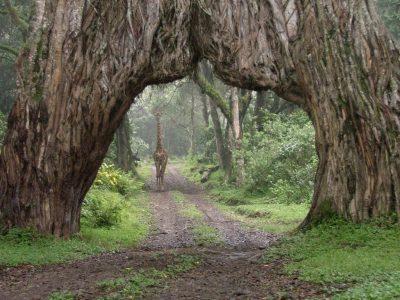 Arusha Park