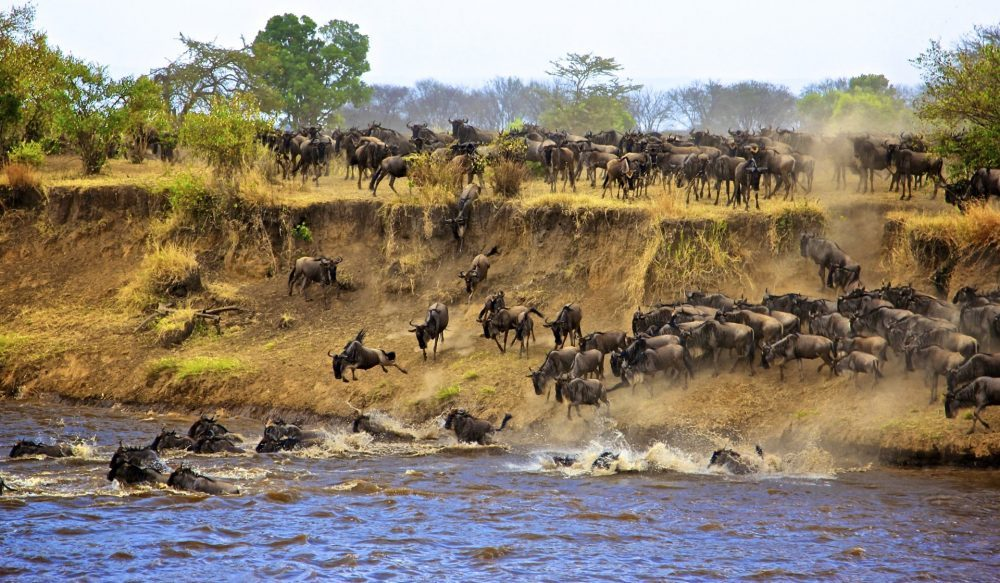 migration safari serengeti