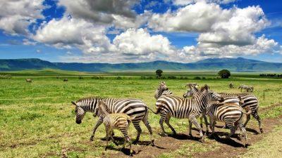 safari to ngorongoro crater