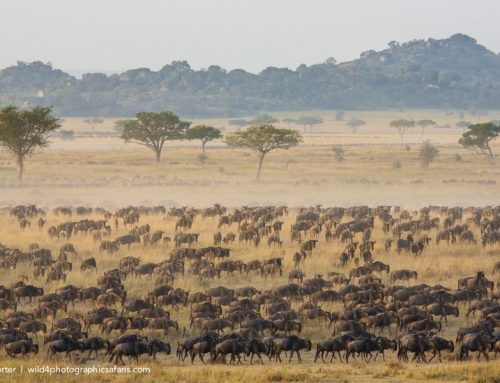 3 Day Serengeti Migration