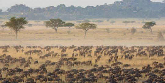 3 Day Serengeti Migration