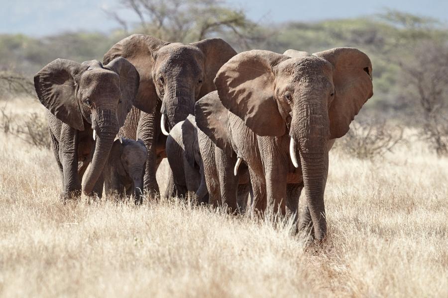 3 Day Tarangire Manyara Safari