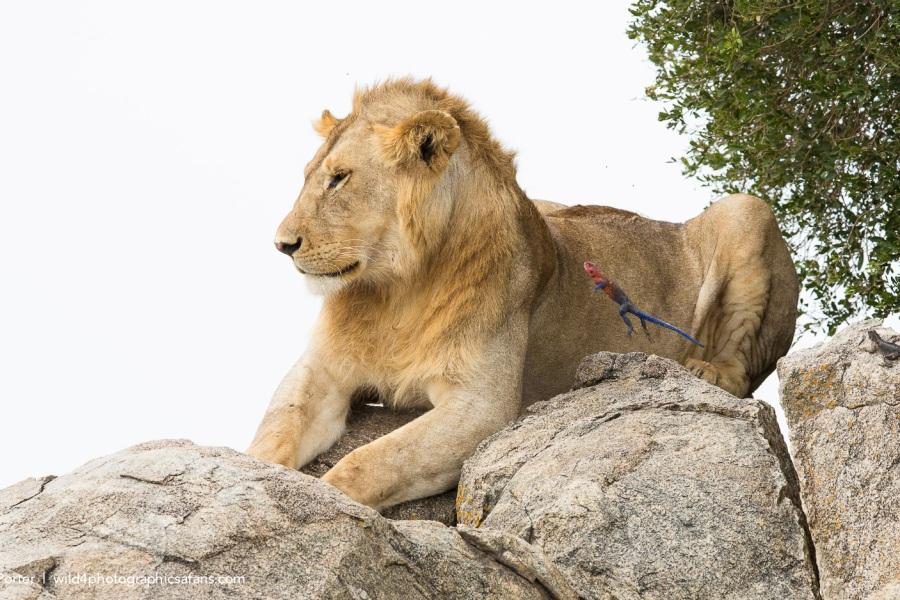 Serengeti Ngorongoro Safari