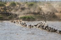 4 Day Serengeti Migration