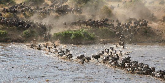 4 Day Serengeti Migration