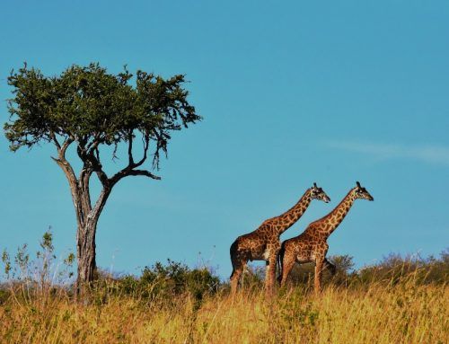 8 Day Northern Zone Safari