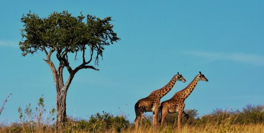 8 Day Northern Zone Safari