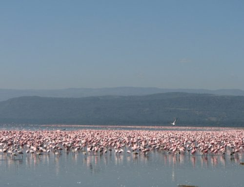 Lake Manyara National Park Day Trip