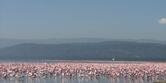 Lake Manyara National Park Day Trip