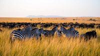 Serengeti Safaris