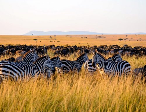 8 Day Safari and Zanzibar Beach Vacation