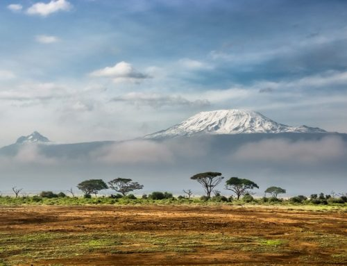 11 Day Kilimanjaro Trekking and Zanzibar Beach Vacation