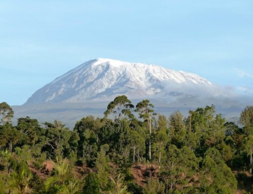 11 Day Kilimanjaro Trekking and Safari