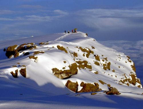 7 Day Kilimanjaro Climb Lemosho Route