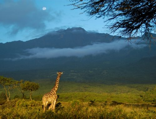 7 Day Kilimanjaro Climb Machame Route