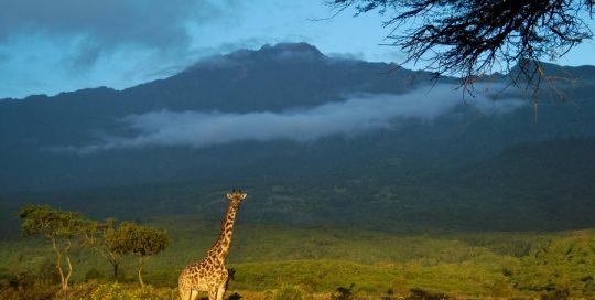 7 day kilimanjaro trekking Machame route