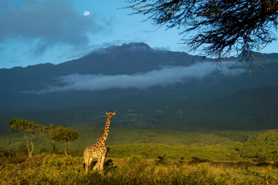 7 day kilimanjaro trekking Machame route