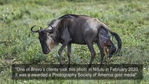 A Photography Society of America gold award medal - From Bravo Expedition Photo Library
